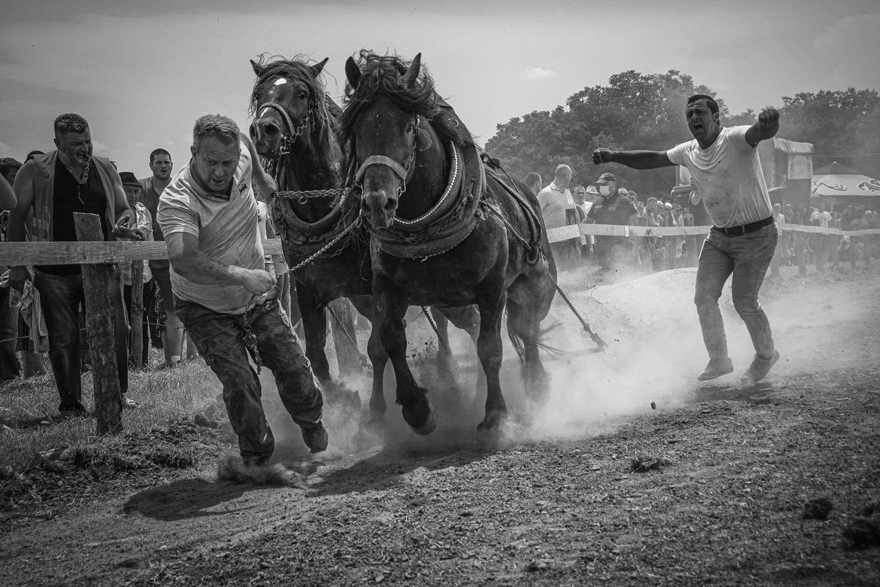 Horse races with logs 2 ( Štraparijada 2 )